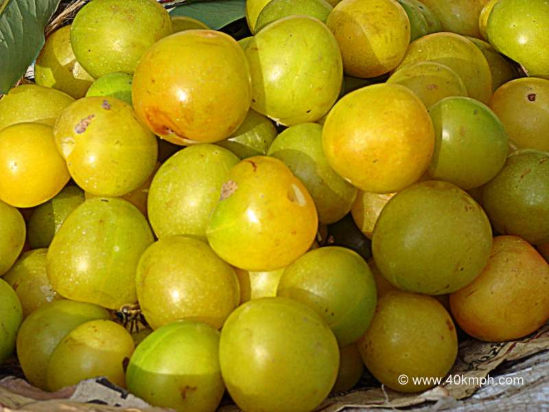 Green Plums - Fruit