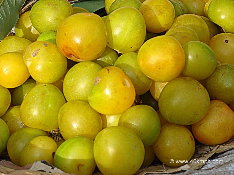 Green Plums - Fruit
