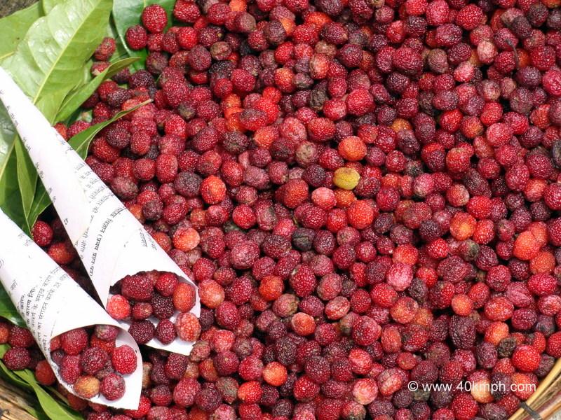 Kafal - Fruit