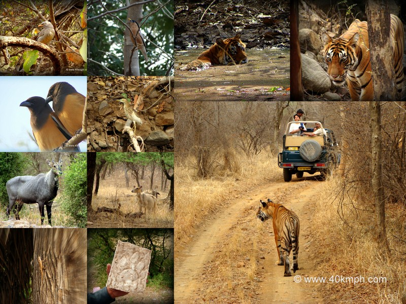Fauna of Ranthambore National Park, Rajasthan