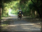 Authorized Sight Seeing Rickshaw at Keoladeo National Park, Bharatpur, Rajasthan