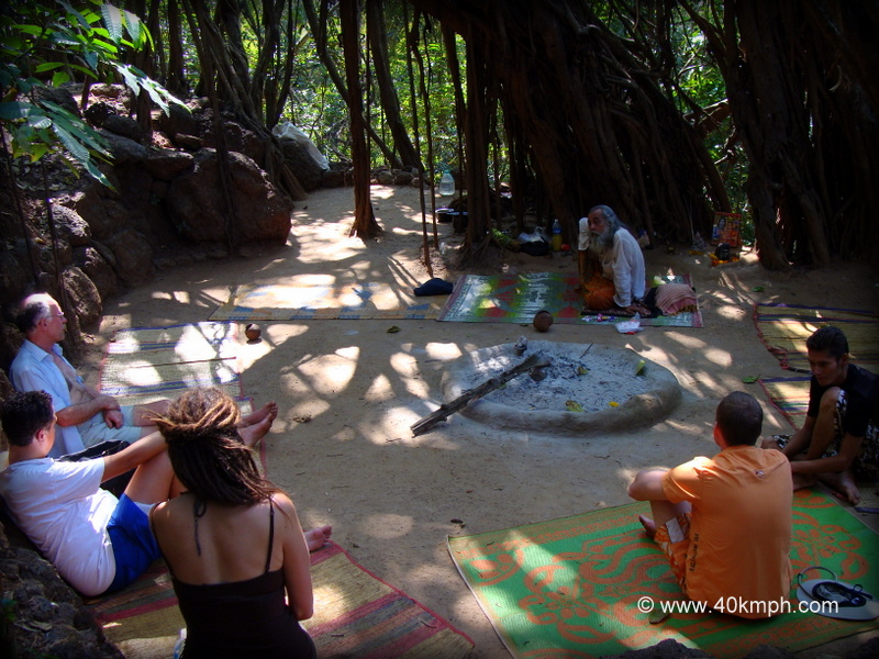 Banyan Tree nearby Sweet Lake, Arambol Beach, Goa