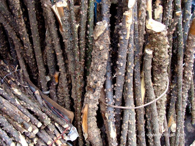 Tejbal Tree Sticks