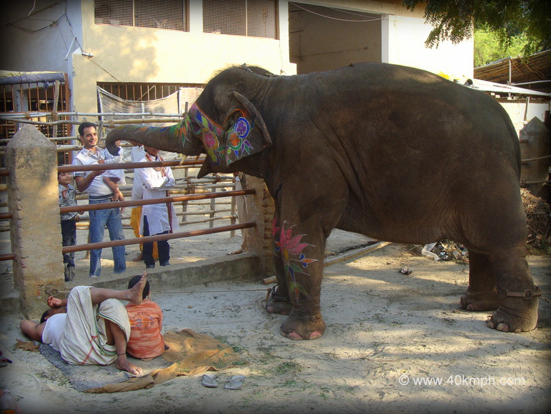 Elephant as Pet