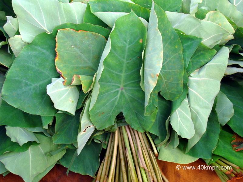 Colocassia Leaves