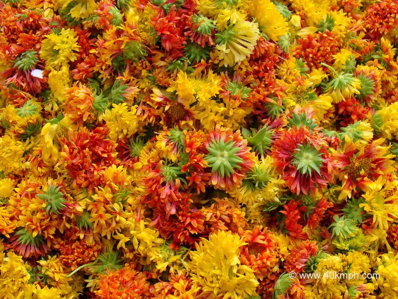 Galadia Flower