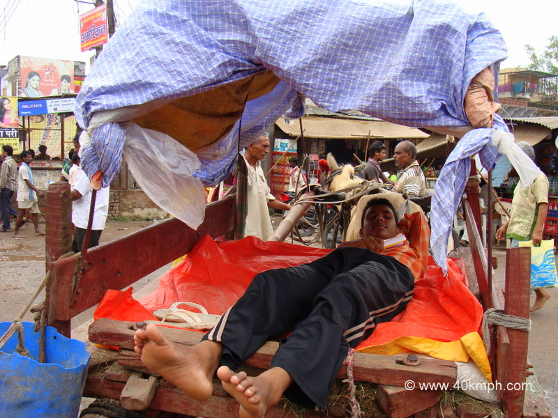 Horse Cart - Local Transport in Vrindavan, Uttar Pradesh