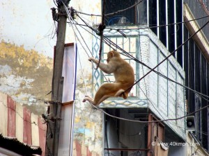 Monkey on Wire