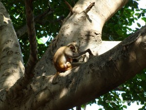 Monkey with Baby Sleeping on Tree