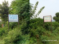 Quotes in Hindi on Trees