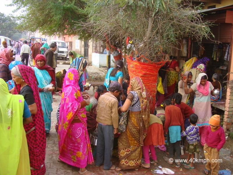 Devotees Worshipping Amla Tree on the Occasion of Amalaki Ekadashi