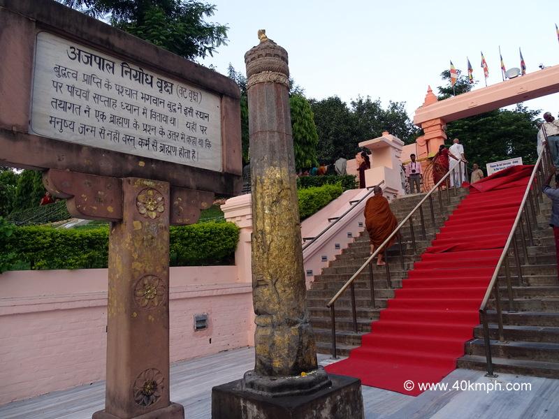 Ajapala Nigrodha Tree (Vat Vriksha), Mahabodhi Temple, Bodhgaya, Bihar