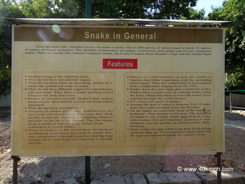 Snake in General and its Features
