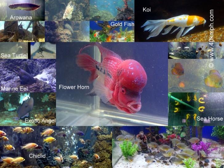 Taraporevala Aquarium, Marine Drive, Mumbai, Maharashtra