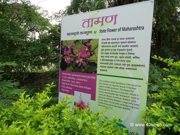Deciduous Tree - State Flower of Maharashtra
