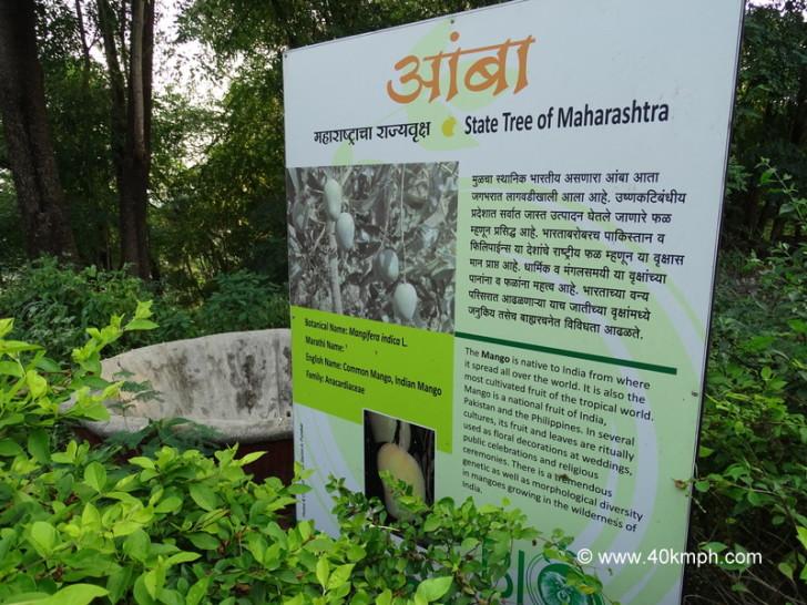 Mango - State Tree of Maharashtra