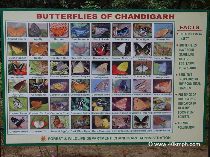Butterflies of Chandigarh