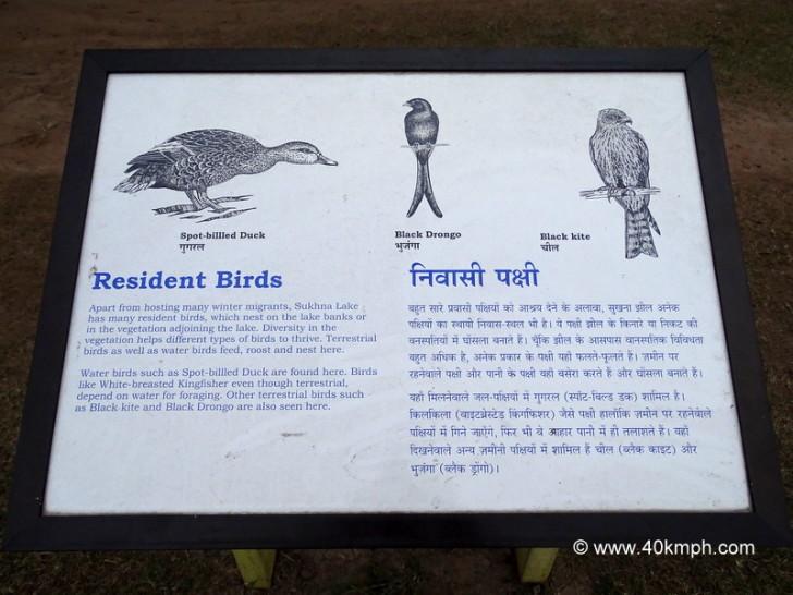 Resident Birds of Sukhna Lake