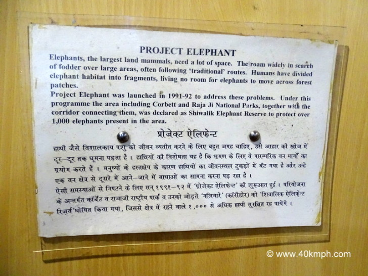 When was Project Elephant Launched